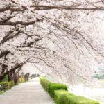 東京のお花見2018年の見頃の時期はいつ?夜桜デートの穴場スポットはどこ?