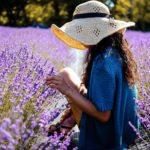 富良野ラベンダーの見頃時期2019開花状況やおすすめの畑の場所は?